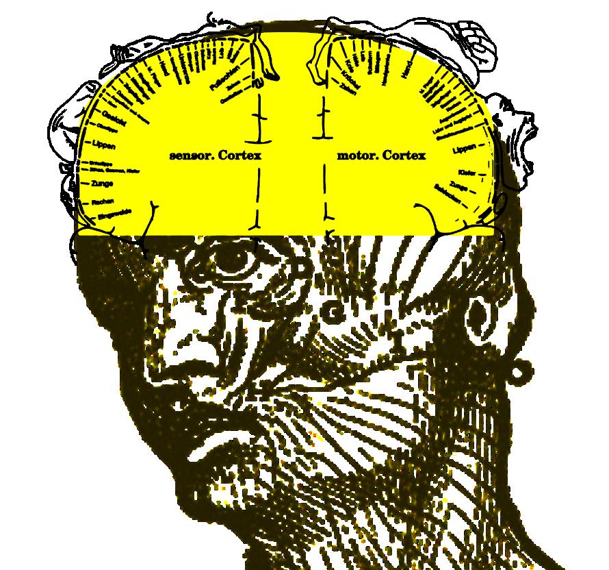 Nerven-Sinnes-System